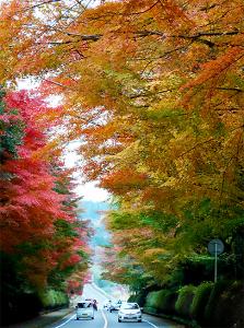 鹿児島暮らし-霧島神宮の紅葉